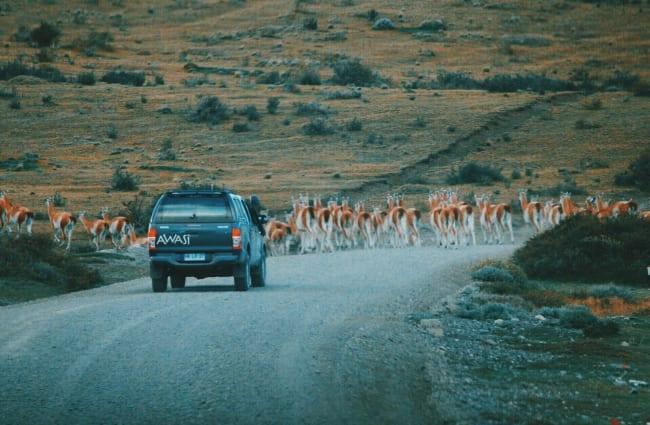 Driving to Punta Arenas