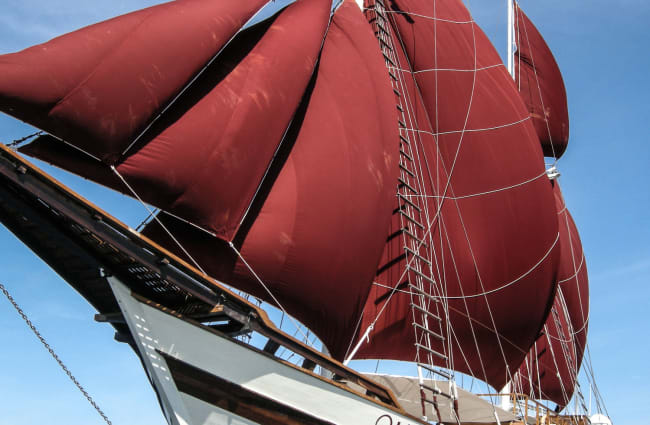 Red sails in the wind