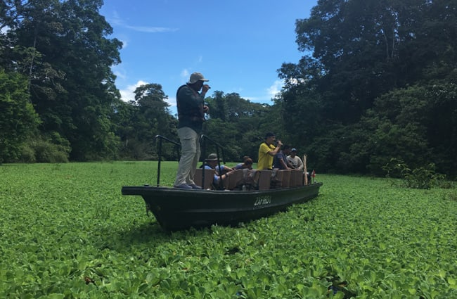 Skiff through water hyacinth amazon
