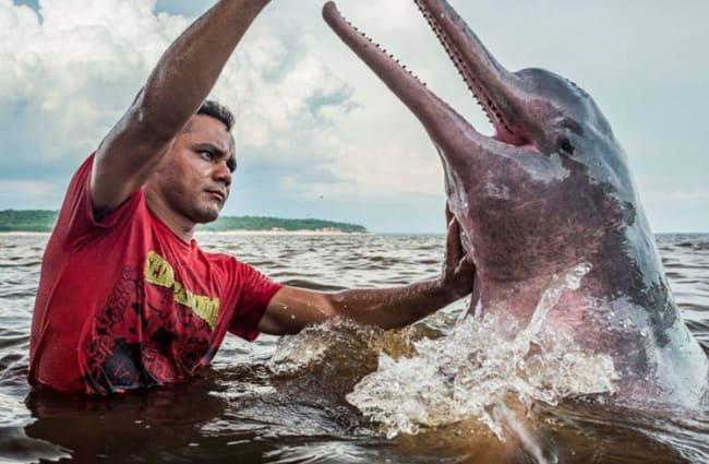 Man feeding river dolphin