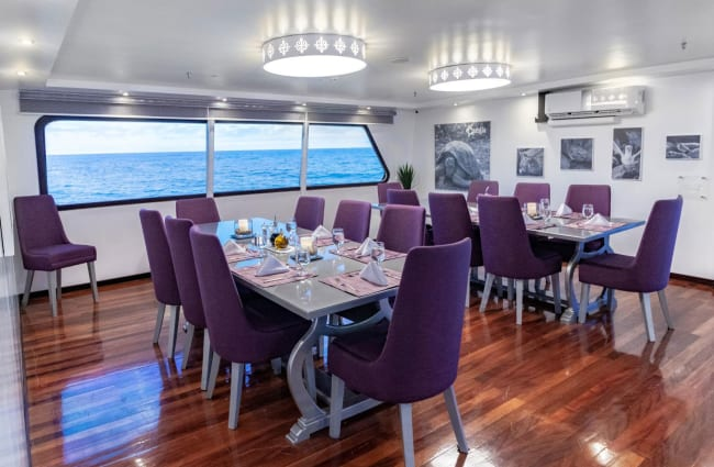 Dining area with purple chairs