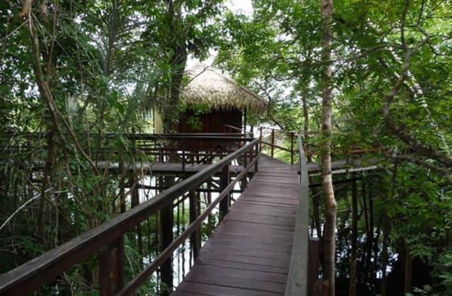 Wooden walkway in the trees