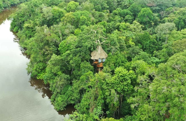 Aerial view of a tree house