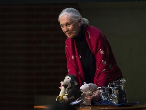 Jane Goodall: nyomorúságos állapotban van a Föld, de most még van esélyünk változtatni | ClimeNews