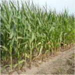 A növénytermesztés nem tud lépést tartani a klímaváltozással - ClimeNews
