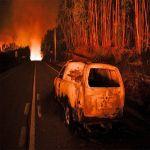 A globális felmelegedés miatt rekordmértékű az erdőpusztulás - ClimeNews