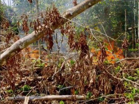 Fatális oka van az esőerdők felgyújtásának! | ClimeNews - Hírportál