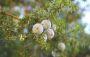 Inkább védd meg az erdőt, mint csak ültess hiába! | ClimeNews - Hírportál