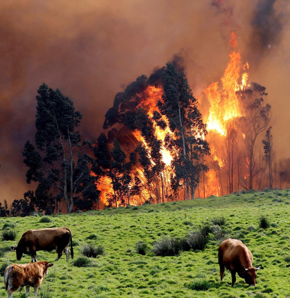 Eljött az idő, hogy pánikba essünk az éghajlatváltozás miatt | Climenews - Hírportál