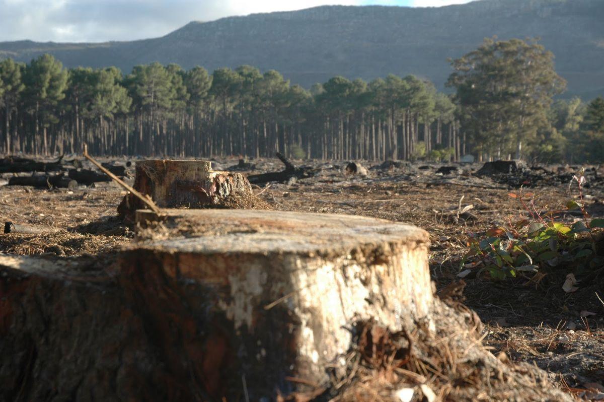 Brüsszeli bíróság előtt Románia erdőirtás miatt | ClimeNews - Hírportál