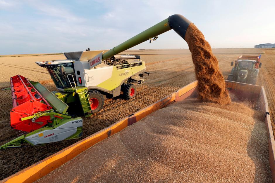 Válság szintre lépett a globális búzaellátás   ClimeNews - Hírportál