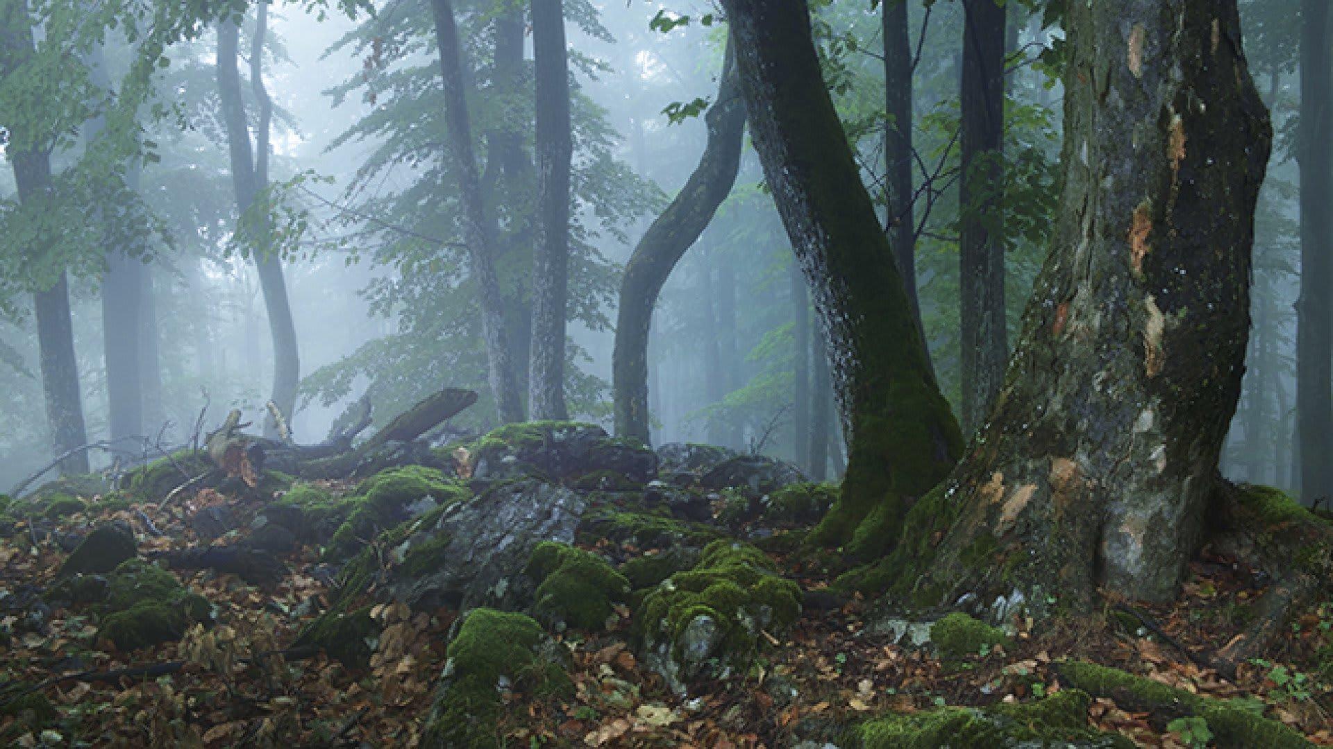 A magyar erdők fejlődéséért | ClimeNews - Hírportál