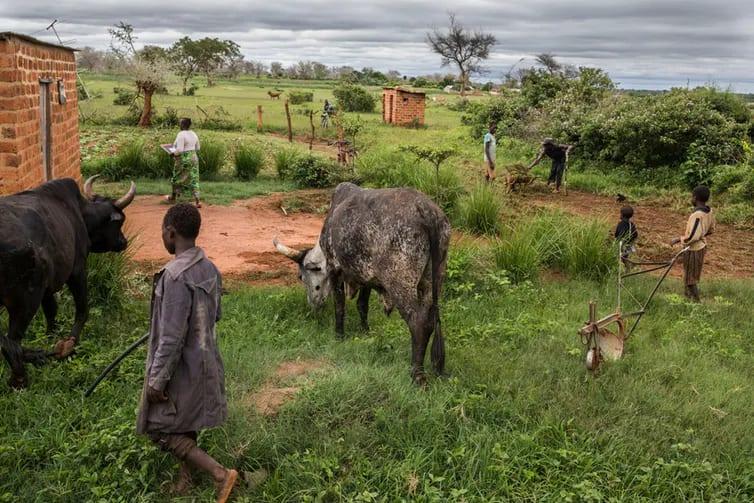 Ázsiában és Afrikában eredő világjárványokról | ClimeNews - Hírportál