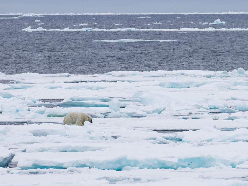 Elmozdult az Északi-sark egyik legvastagabb egybefüggő jégtáblája