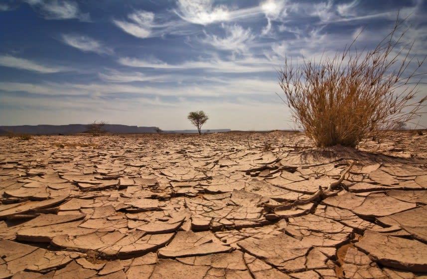 Nem egységesek az elsivatagosodás ellen folytatott uniós küzdelem intézkedései