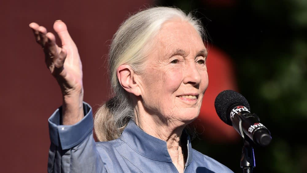 Jane Goodall - Nem söpörhetjük az emberi népesedés kérdését a szőnyeg alá | ClimeNews