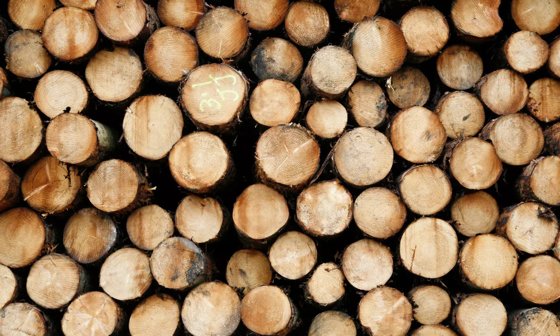 A legtöbb betakarított fából származó szén-dioxid hamarosan visszatér a légkörbe | ClimeNews
