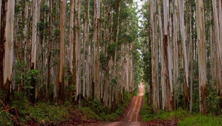 Forrest in Brazil - Megjelent a Tetra Pak<sup>®</sup> Fenntarthatósági Jelentése - ClimeNews