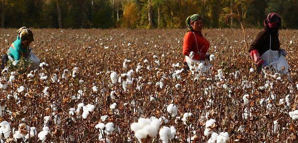 Ki a zöldebb? Versenyeznek a farmergyártók | ClimeNews - Hírportál