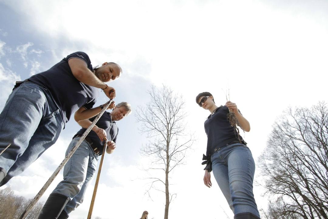 Ötezer új facsemete Magyarországon a levegő tisztításáért