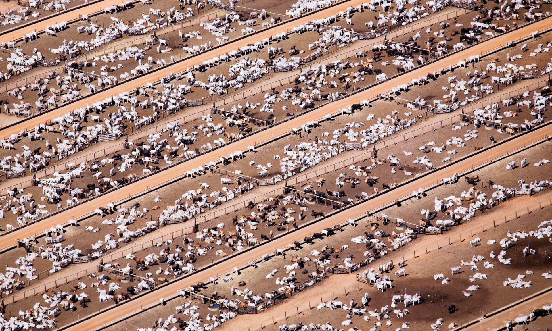 Hízlalótelep, fotó: Daniel Bertra/Greenpeace | ClimeNews