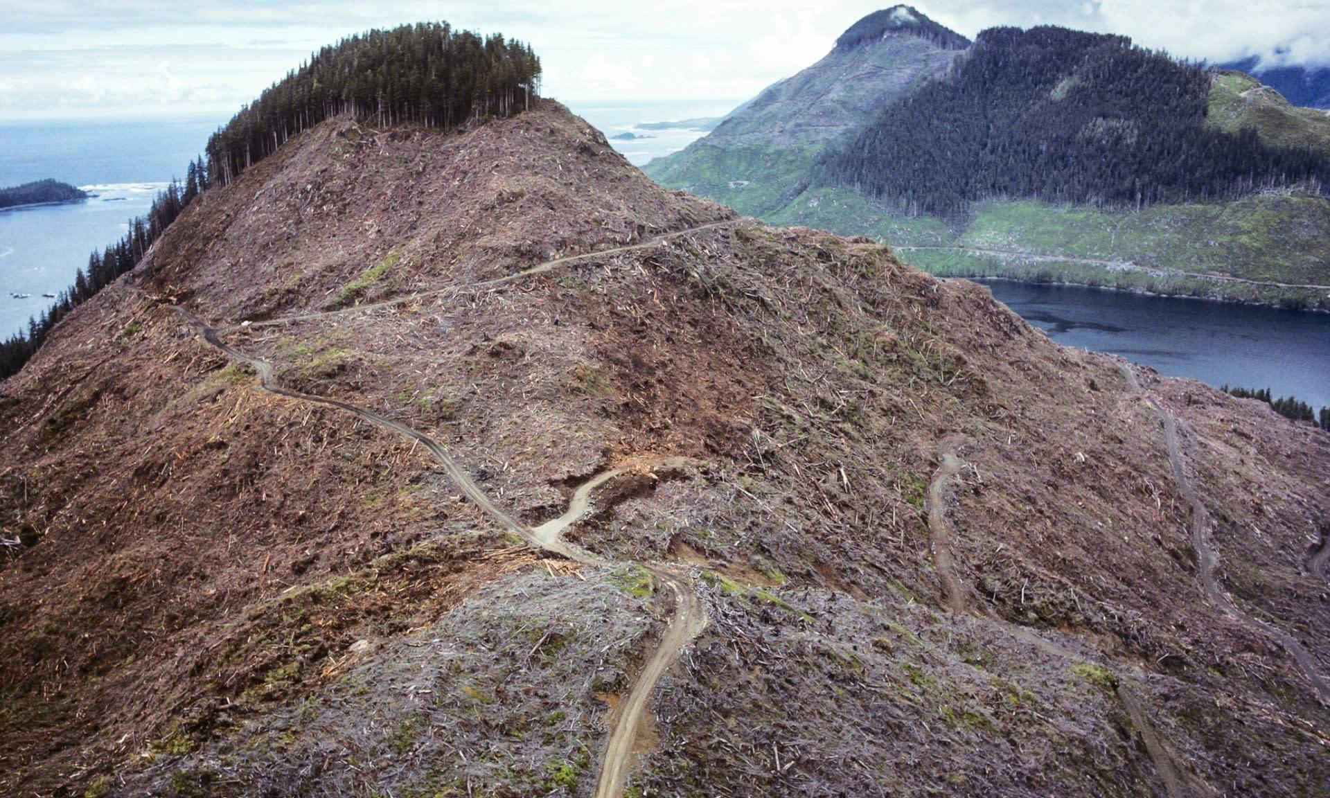 Erdőirtás British Columbiában, fotó: Garth Lentz | ClimeNews