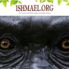 Daniel Quinn: Ishmael | ClimeNews Hírportál