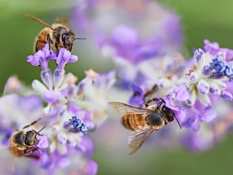 Meg kell állítani az európai rovarvilág rohamos pusztulását | ClimeNews