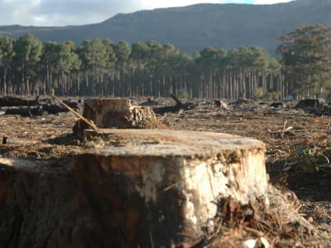Brüsszeli bíróság előtt Románia erdőirtás miatt   ClimeNews - Hírportál
