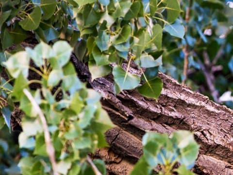 Erdők Nemzetközi Napja - Túl értékes elveszíteni   ClimeNews - Hírportál