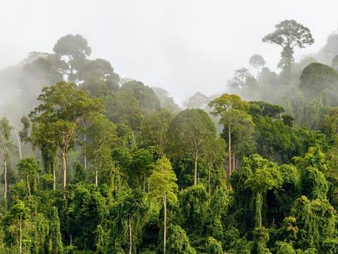 Faültetés kontra erdőmentés   ClimeNews - Hírportál