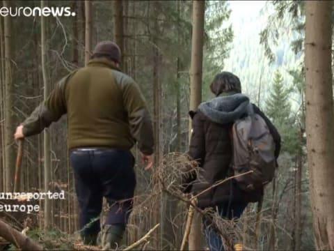 A faipari maffia behálózza Romániát | ClimeNews - Hírportál