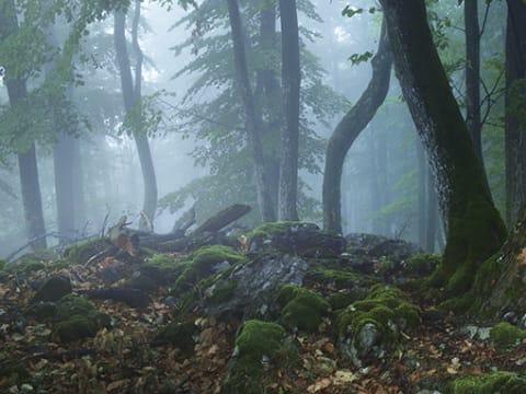 A magyar erdők fejlődéséért   ClimeNews - Hírportál