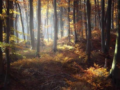 Alaptörvény-ellenes az erdőtörvény 2017-es módosítása | ClimeNews