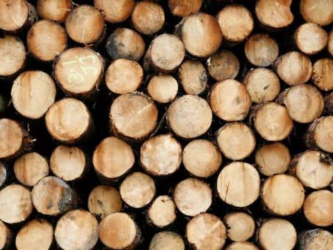 A legtöbb betakarított fából származó szén-dioxid hamarosan visszatér a légkörbe   ClimeNews