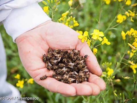 A neonikotinoid növényvédő szerek nemcsak a házi méheket, hanem a vadvilágot is veszélyeztetik - ClimeNews