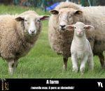 Varga Lóránt - A farm | ClimeNews - Hírportál