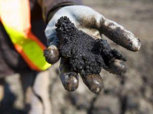 Örül a jegesmedve az olcsó olajnak? | ClimenNews - Hírportál