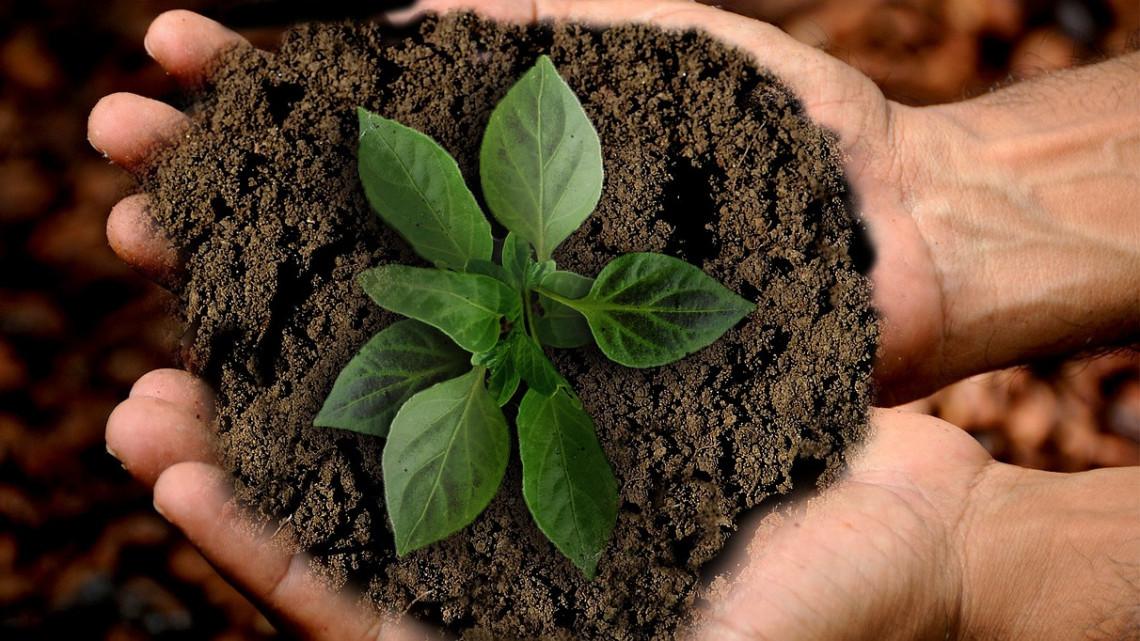 Kép: Pixabay.com | Új gazdasági trend épül, búcsúzhatunk a fogyasztói társadalomtól? | ClimeNews