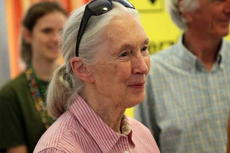 Jane Goodall | Gondolatok az emberről és a természetről - ClimeNews