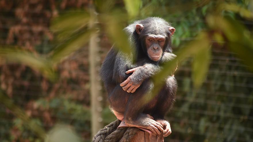 Jane Goodall: nincs sok időnk | ClimeNews - Hírportál