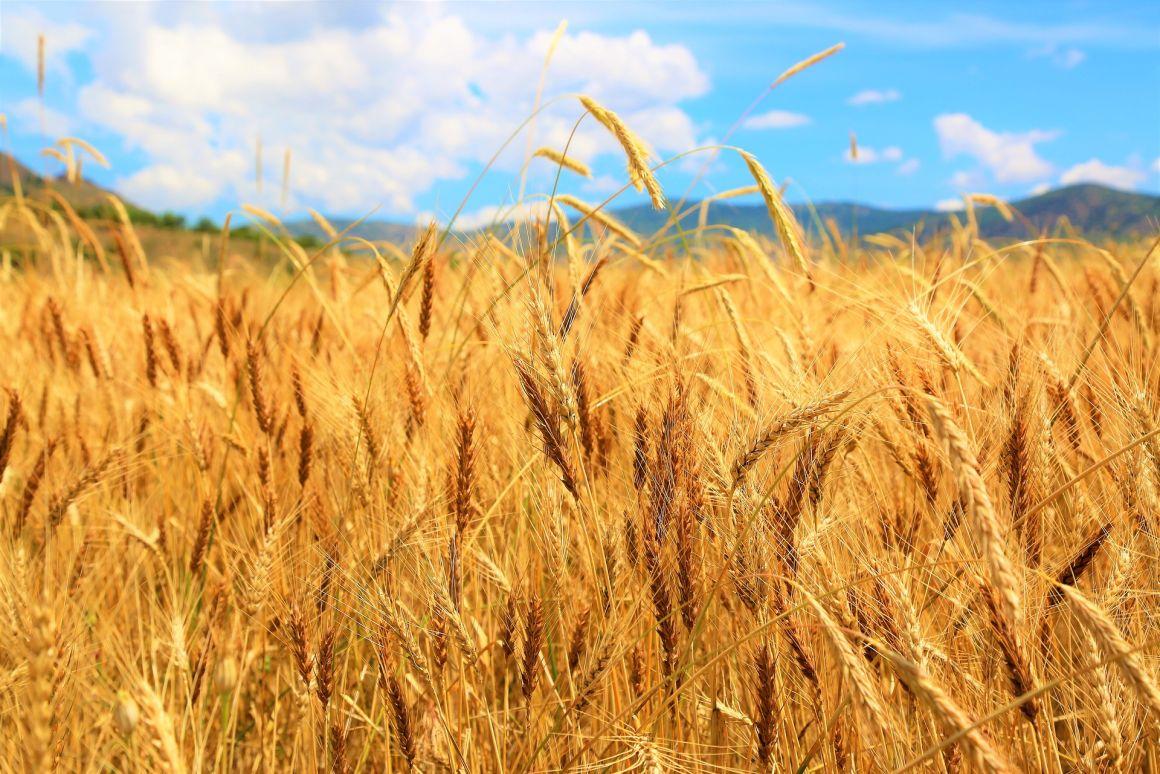A klímaváltozás és a GMO-ellenesség is fenyegeti az emberiség élelemellátását az MTA kutatói szerint | ClimeNews