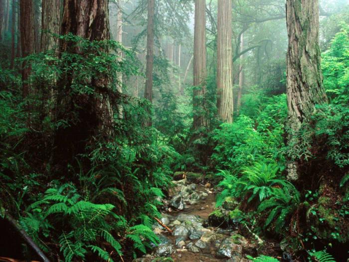A jövő üzlete a háborítatlan erdő   ClimeNews - Hírportál