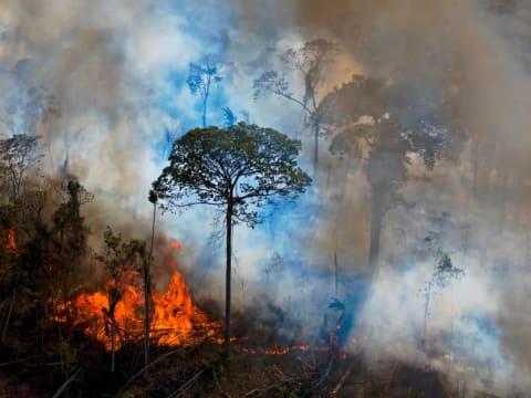 Folyamatban az ökoszisztéma pusztításának bűncselekménnyé nyilvánítása | ClimeNews