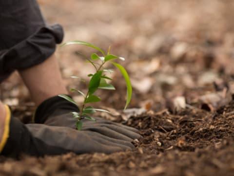 Faültetéssel hazudják, hogy karbonsemleges | ClimeNews - Hírportál