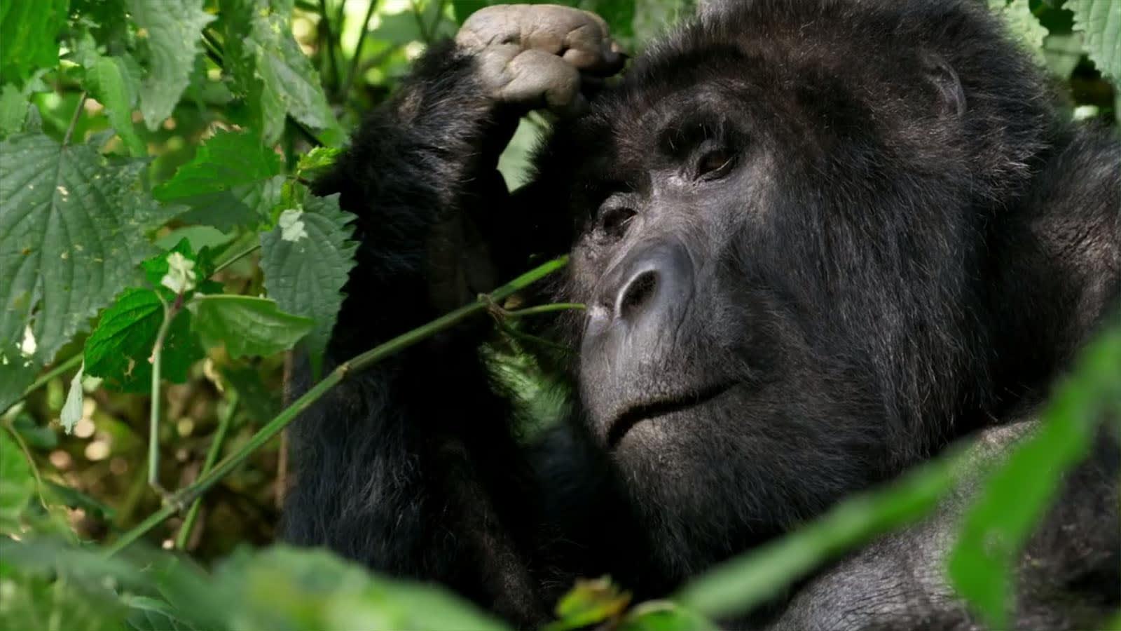 David Attenborough: Élet a Bolygónkon   Hivatalos Előzetes