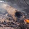 Soha nem látott mértékben pusztul az Amazonas | ClimeNews