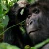 David Attenborough: Élet a Bolygónkon | Hivatalos Előzetes | ClimeNew