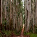 Forrest in Brazil - Megjelent a Tetra Pak Fenntarthatósági Jelentése - ClimeNews