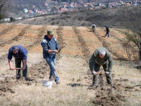 Ötszázötven hektár erdőt telepített a Pilisi Parkerdő | ClimeNews